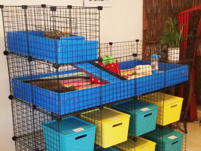 Indoor cages for guinea pigs including C&C cages, large